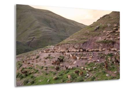 A Herd of Llamas, Alpacas and Sheep Round a Mountain Bend in Peru-Erika Skogg-Metal Print