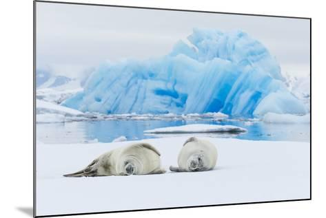 Two Crabeater Seals Lying on an Ice Floe in Grandidier Channel, Antarctica-Ralph Lee Hopkins-Mounted Photographic Print