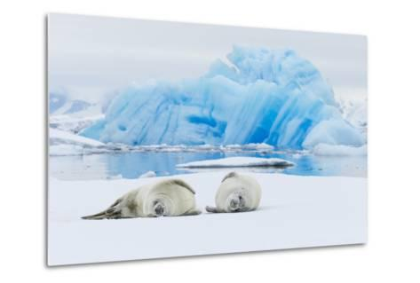 Two Crabeater Seals Lying on an Ice Floe in Grandidier Channel, Antarctica-Ralph Lee Hopkins-Metal Print