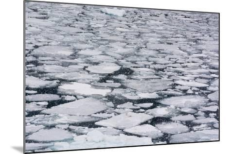 Pack Ice in Disko Bay During a Snow Storm-Sergio Pitamitz-Mounted Photographic Print