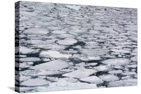 Pack Ice in Disko Bay During a Snow Storm-Sergio Pitamitz-Stretched Canvas Print