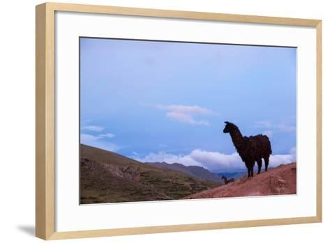 Two Llamas Stand in the Mountains of Peru-Erika Skogg-Framed Art Print