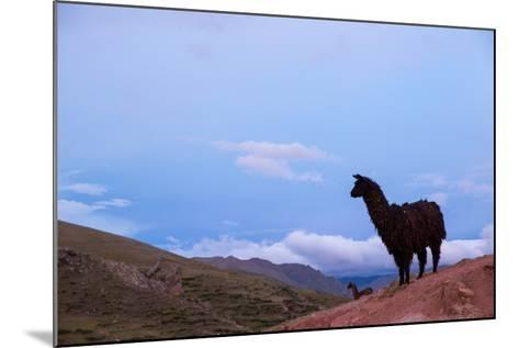 Two Llamas Stand in the Mountains of Peru-Erika Skogg-Mounted Photographic Print