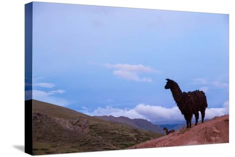 Two Llamas Stand in the Mountains of Peru-Erika Skogg-Stretched Canvas Print