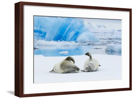 Two Crabeater Seals Lying on an Ice Floe in Grandidier Channel, Antarctica-Ralph Lee Hopkins-Framed Art Print