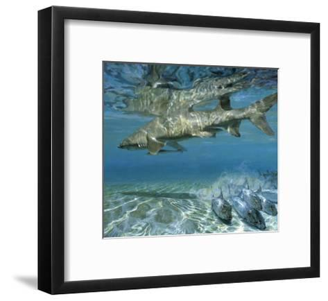 Lemon Shark and Fleeing Bonefish, 1988: Bonefish Go One Way While a Cruising Shark Goes Another-Stanley Meltzoff-Framed Art Print
