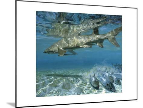 Lemon Shark and Fleeing Bonefish, 1988: Bonefish Go One Way While a Cruising Shark Goes Another-Stanley Meltzoff-Mounted Giclee Print