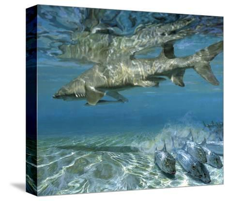 Lemon Shark and Fleeing Bonefish, 1988: Bonefish Go One Way While a Cruising Shark Goes Another-Stanley Meltzoff-Stretched Canvas Print
