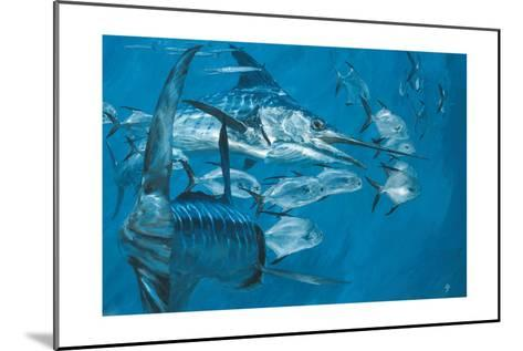 Two Striped Marlin and Pompano, Cabo San Lucas: Striped Marlin Work as a Team to Round Up Pompano-Stanley Meltzoff-Mounted Giclee Print