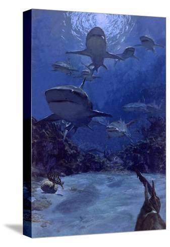 Homing into the Rookery, Dry Bar, 1975: Near the Famous Sleeping Shark Rookery in Dry Bar-Stanley Meltzoff-Stretched Canvas Print