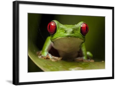 Portrait of a Red-Eyed Tree Frog, Agalychnis Calidryas-Robin Moore-Framed Art Print
