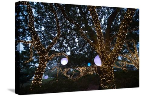 Holiday Lights Light Up a Wooded Area-Joel Sartore-Stretched Canvas Print