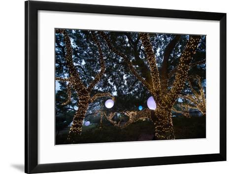 Holiday Lights Light Up a Wooded Area-Joel Sartore-Framed Art Print