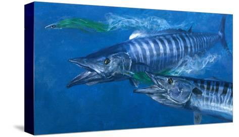 Two Wahoo, 1986: Two of the Fastest Fish in the Sea Close in on Colorful Trolling Lures-Stanley Meltzoff-Stretched Canvas Print