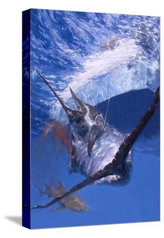 Gaffed: Makaira Nigricans, a Defeated Blue Marlin Is Brought Alongside a Sport Fishing Boat-Stanley Meltzoff-Stretched Canvas Print