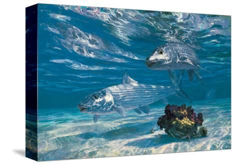 Two Bonefish and Coral Clump with Crab at Chub Bay-Stanley Meltzoff-Stretched Canvas Print