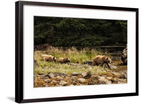 A Grizzly Bear Family Foraging Among Rocks at Low Tide-Cesare Naldi-Framed Art Print