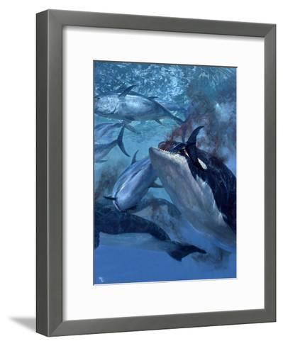 Orca and Tuna, 1973: a School of Giant Bluefin Tuna Becomes Food for a Pod of Killer Whales-Stanley Meltzoff-Framed Art Print
