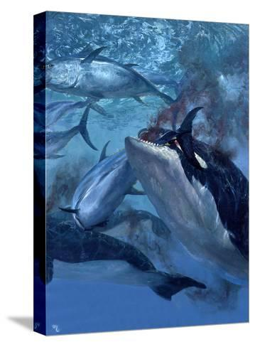 Orca and Tuna, 1973: a School of Giant Bluefin Tuna Becomes Food for a Pod of Killer Whales-Stanley Meltzoff-Stretched Canvas Print