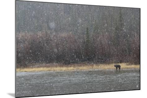A Grizzly Bear Fishes at the Fishing Branch River in the Rain-Cristina Mittermeier-Mounted Photographic Print