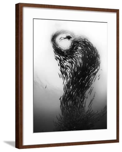 A School of Barracuda, Sphyraena Species, Swimming Upward in a Spiraling Tower Formation-David Doubilet-Framed Art Print