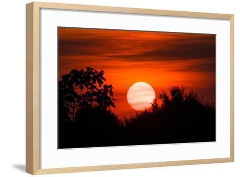 Trees Silhouetted Against a Sunset in the Brazilian Pantanal-Steve Winter-Framed Art Print