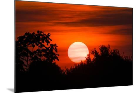 Trees Silhouetted Against a Sunset in the Brazilian Pantanal-Steve Winter-Mounted Photographic Print