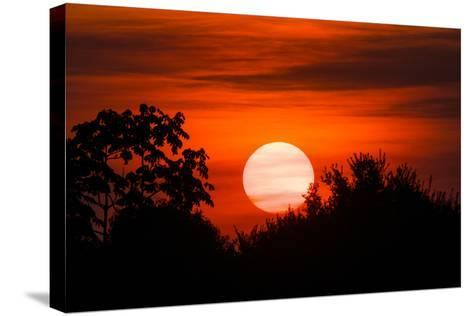 Trees Silhouetted Against a Sunset in the Brazilian Pantanal-Steve Winter-Stretched Canvas Print