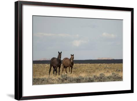 Heat from the Late Summer Sun Distorts and Softens a View of Horses on Blue Moon Bench-Bill Hatcher-Framed Art Print