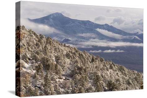 Newly Fallen Snow Along Wheeler Peak Scenic Drive in Great Basin National Park-Phil Schermeister-Stretched Canvas Print