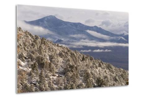 Newly Fallen Snow Along Wheeler Peak Scenic Drive in Great Basin National Park-Phil Schermeister-Metal Print