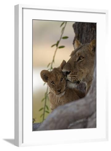 A Lioness Nuzzling Her Cub-Beverly Joubert-Framed Art Print