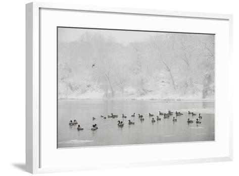 Canada Geese in the Potomac River in a Snowy Landscape-Irene Owsley-Framed Art Print