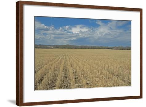 Clouds Billow over a Harvested Wheat Field Near Bozeman, Montana-Gordon Wiltsie-Framed Art Print