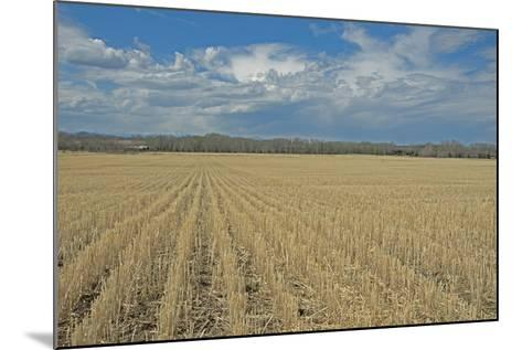 Clouds Billow over a Harvested Wheat Field Near Bozeman, Montana-Gordon Wiltsie-Mounted Photographic Print