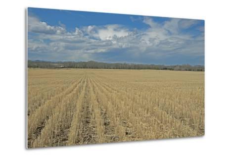 Clouds Billow over a Harvested Wheat Field Near Bozeman, Montana-Gordon Wiltsie-Metal Print