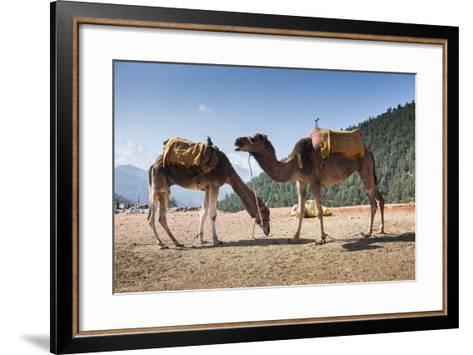 Camels on the Side of a Road in Morocco-Richard Nowitz-Framed Art Print