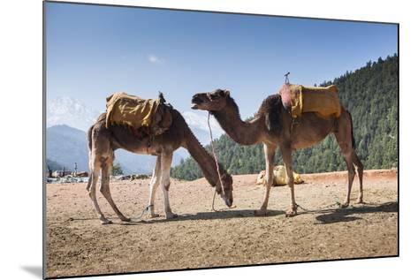 Camels on the Side of a Road in Morocco-Richard Nowitz-Mounted Photographic Print