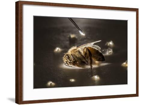 A Syringe Places a Minute Droplet of Phenothrin on a Honeybee-Anand Varma-Framed Art Print