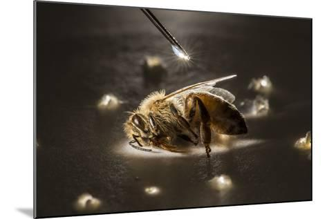 A Syringe Places a Minute Droplet of Phenothrin on a Honeybee-Anand Varma-Mounted Photographic Print
