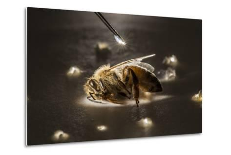 A Syringe Places a Minute Droplet of Phenothrin on a Honeybee-Anand Varma-Metal Print