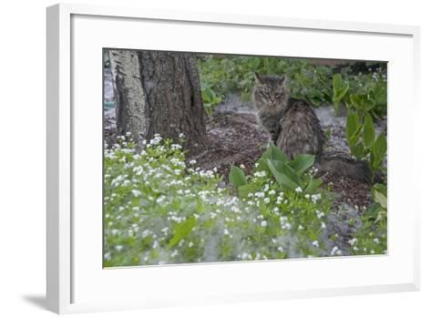 Seed-Bearing 'Cotton' from a Quaking Aspen Tree Falls on a Cat and a Garden of Sweet Woodruff-Gordon Wiltsie-Framed Art Print