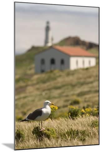 A Western Gull on Anacapa Island in Channel Islands National Park-Phil Schermeister-Mounted Photographic Print