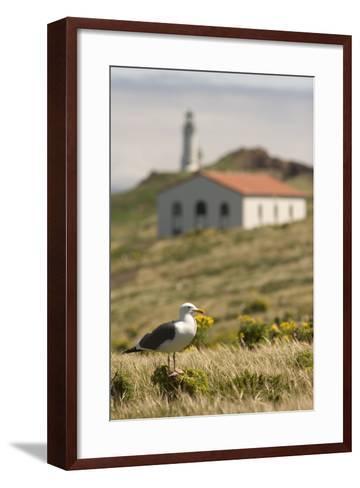 A Western Gull on Anacapa Island in Channel Islands National Park-Phil Schermeister-Framed Art Print