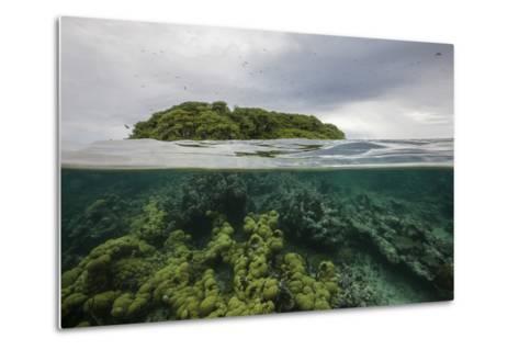 Coral Reef on the Mosquitia Coast-Cristina Mittermeier-Metal Print