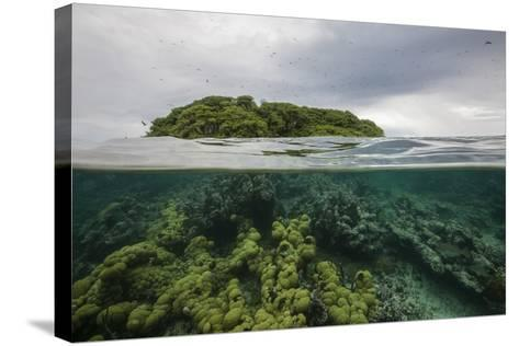 Coral Reef on the Mosquitia Coast-Cristina Mittermeier-Stretched Canvas Print