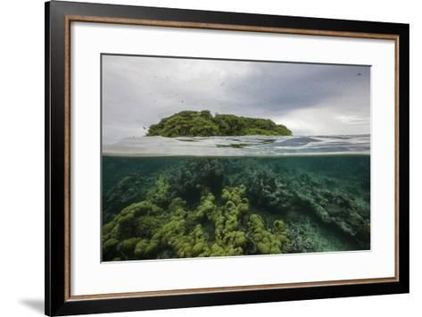 Coral Reef on the Mosquitia Coast-Cristina Mittermeier-Framed Art Print