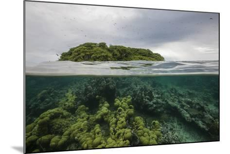 Coral Reef on the Mosquitia Coast-Cristina Mittermeier-Mounted Photographic Print