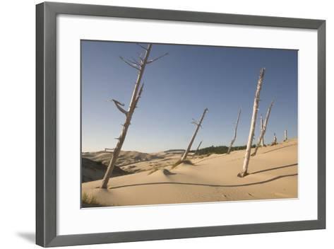 Dead Conifer Trees in Sand Dunes Along John Dellenback Trail, Oregon Dunes National Recreation Area-Phil Schermeister-Framed Art Print