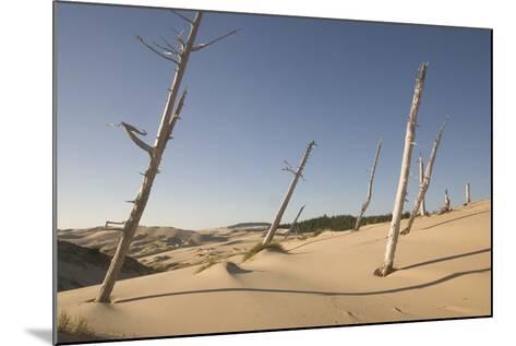 Dead Conifer Trees in Sand Dunes Along John Dellenback Trail, Oregon Dunes National Recreation Area-Phil Schermeister-Mounted Photographic Print